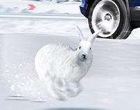 Winter. Car. Rabbit.