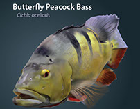 Zoo Plate: Peacock Bass