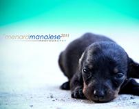 Labrador - Dachshund Puppies | 2 Weeks Old
