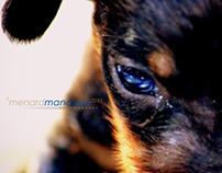 Labrador - Dachshund Puppies | 3 Weeks Old