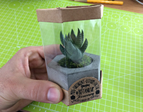 BOTANICUP BOX AND POT DESIGN