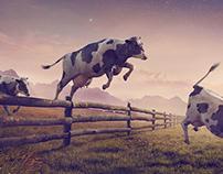 Cargill/Cow