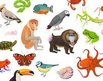 My First Encylopedia of Animals
