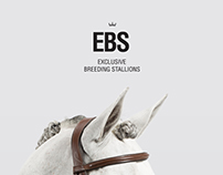 Exclusive Breeding Stallions