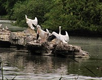 Pelican's life - Part 2: The Three Graces