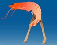 Shrimp Giraffe