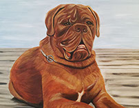 Diego - Dogue de Bordeaux