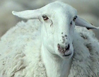 SHEPHERD (tv Campaign)