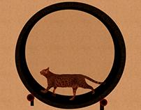 Roda de Exercícios para gatos ◉ Cats exercises weel