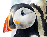 Digiltal Ilustration - Pingüinos