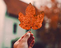 Fall - Autumn Photoshop Actoions