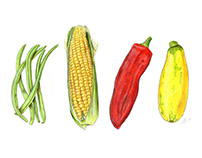 Four Vegetables