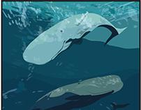 2013 Whale Calendar