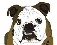 Phyllis the Bulldog-Illustrations