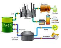 Algae Biofuels Project