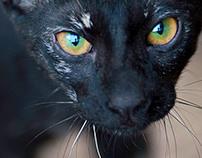 Portraits of Street Cats