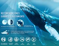 Infografía - Avistamiento de Ballenas  Revista Bacanika