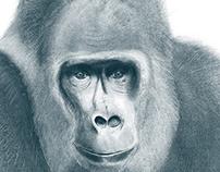 WILDLIFE | Animal Editorial
