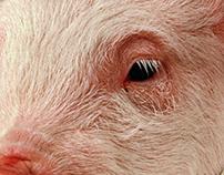 PIG Mr/president - poster design