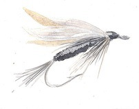 Fly-Fishing Illustrations