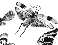 Illustrations for The New York Times.