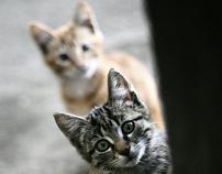 Kitty Kitty Kats!