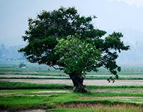 Tree Stories ...