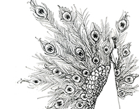 Peacock sketches