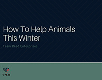 How To Help Animals This Winter