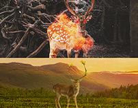 Deer Sprit