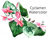 Cyclamen - watercolor elements