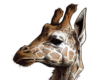 Scientific Illustration: Baringo Giraffe