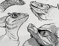 Sketches: Reptiles