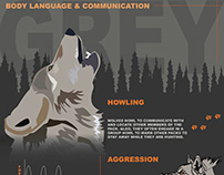 Infographic- Wolf