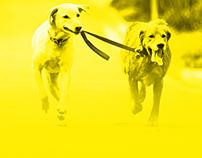 Dog Walking & dog training services
