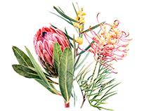 Mixed flower Botanical study