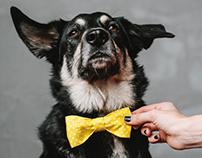 Sharik-dog accessories autumn 2016
