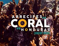 Arrecifes de Coral para iPad
