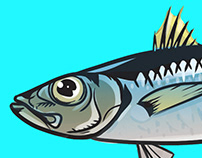 Fish illustrations / National Geographic Turkiye
