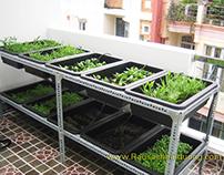 Dịch vụ trồng rau an toàn