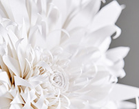 Amorepacific_Councelor (Flower concept paperart)