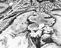 coral landscapes.