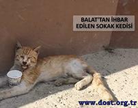 Yaralı Sokak Kedisi