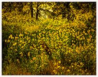 The Palouse: Landscape of Rolling Hills