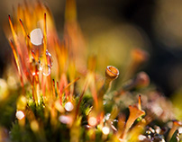 The little world of the icelandic moss