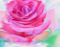 Flower Daze