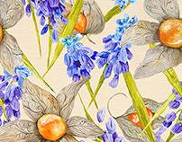 Provence Physalis and Muskari Watercolors