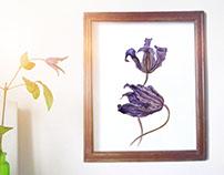"Botanical Watercolor ""Clematis"""