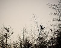a Bird Fly