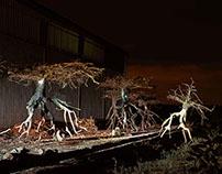 Metaphors of rootlessnes